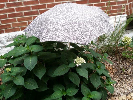 Umbrella in garden